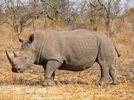 Contested Biodiversities:  Unpacking power and privilege in KwaZulu-Natal's Biodiversity Stewardship Programme, South Africa, by ShirleyBrooks
